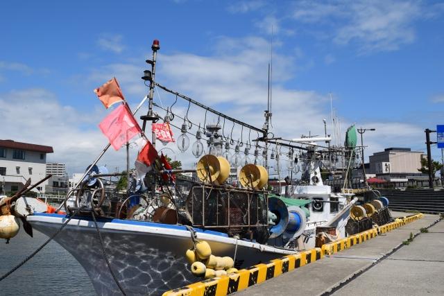 北海道の有名海産物!イカの種類と美味しい食べ方を徹底解説!
